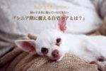 【愛犬のシニア期に備える自宅ケア】@横浜〜ゆるゆる犬活〜