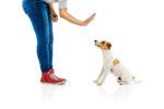 【愛犬の心身の健康をまもる若齢期からはじめるおうちケア】@横浜